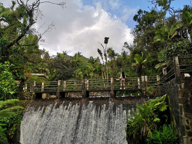 Ein Jahr zurück, Tag 3: Der zweite Tag in Puerto Rico: Regenwald & Löwen-Sieg, 09.11.2019